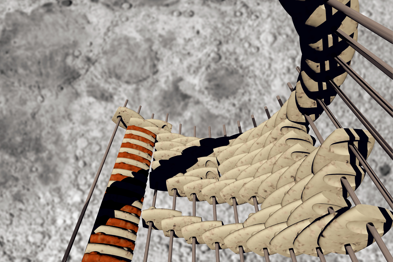 Concrete Moonbabies (2002) simulated enclosure